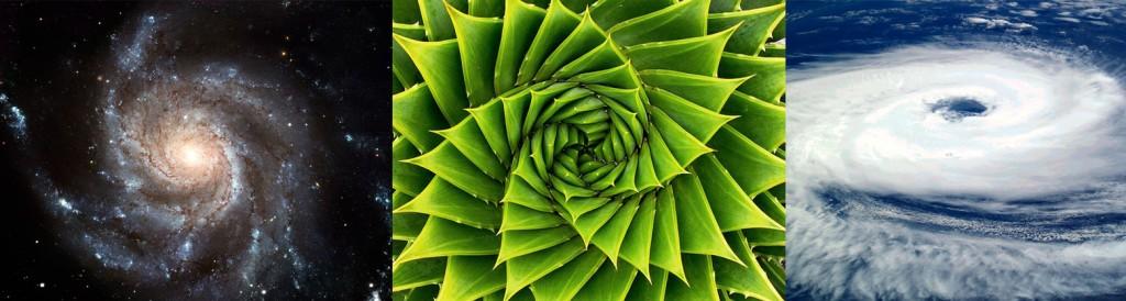 Spirales dans la nature